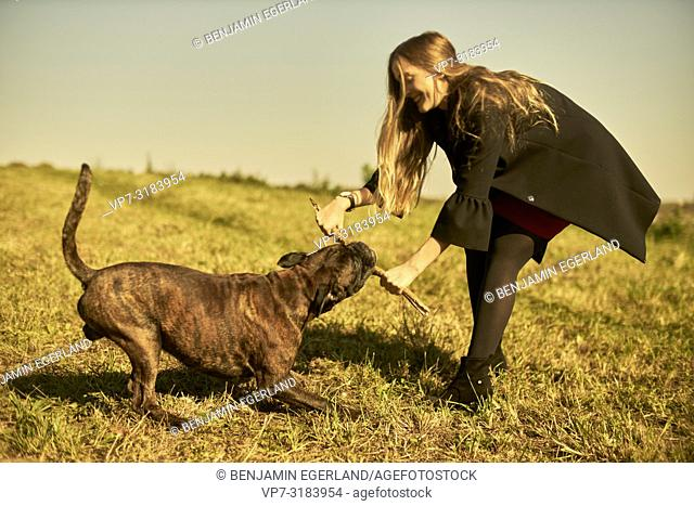 woman with dog on meadow in Unterhaching, pulling stick, Munich, Bavaria, Germany