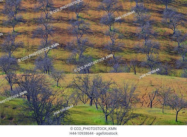 USA, United States, America, California, Paso Robles, Central california, Trees, Orchard