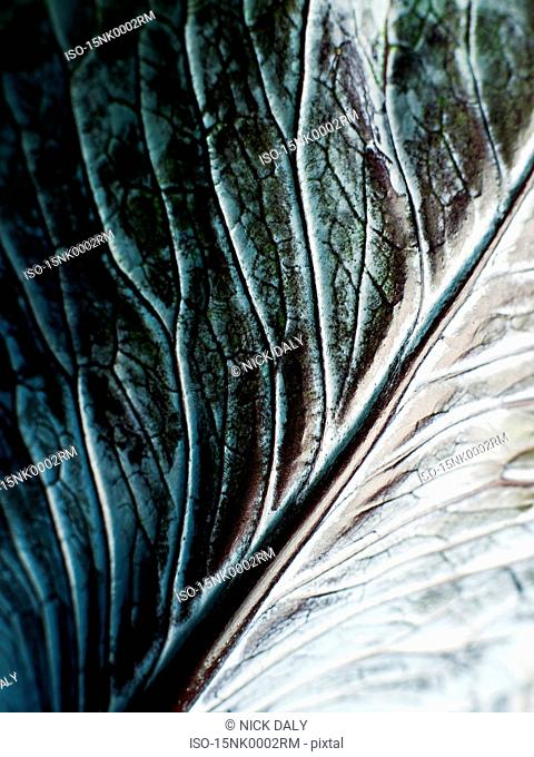 A close up of a cabbage leaf
