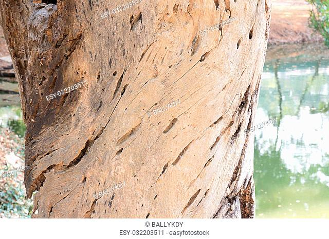 tree trunk with rough surface, texture background