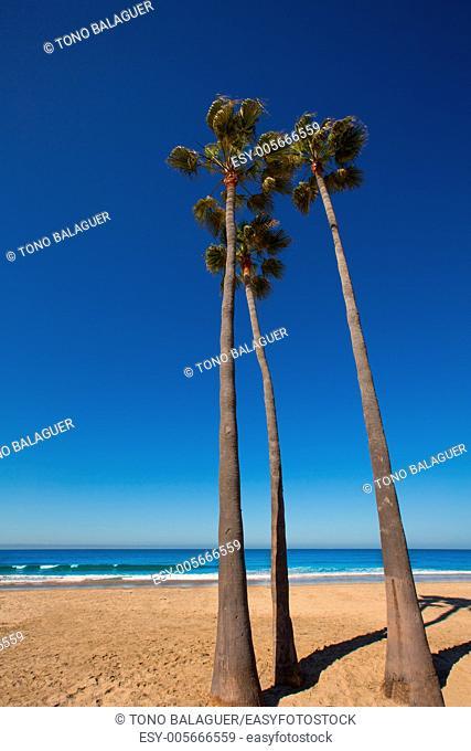Newport beach California three palm trees group on shore