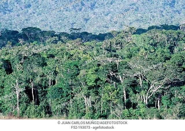 Tropical forest. Canaima National Park. Venezuela