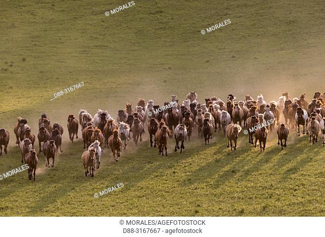 China, Inner Mongolia, Hebei Province, Zhangjiakou, Bashang Grassland, horses running in a group in the meadow