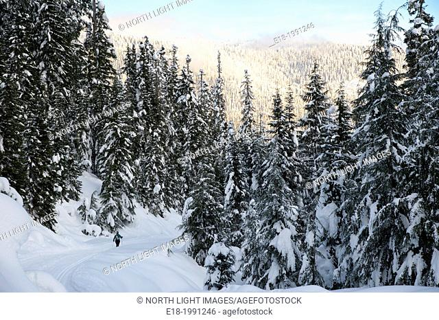 Canada, BC, Whistler. Callaghan Valley nordic ski area