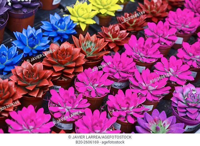 Flowers. Garden center. Hondarribia. Gipuzkoa. Basque Country. Spain