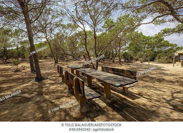 area recreativa de Can Marroig (Centro de interpretación Parc Natural de Ses Salines), Formentera, Balearic Islands, Spain