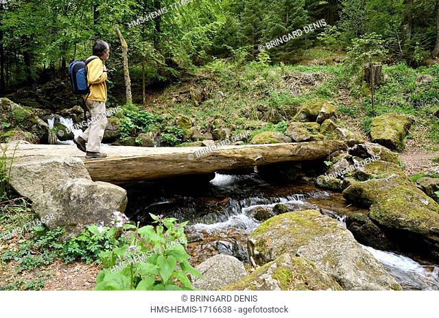 France, Bas Rhin, Natzwiller, the Serva waterfall below the Champ du Feu, hiker on bridge upstream of the cascade
