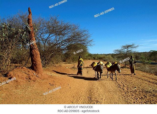 Girls with donkeys, Borana tribe, South Ethiopia, Domestic Donkey