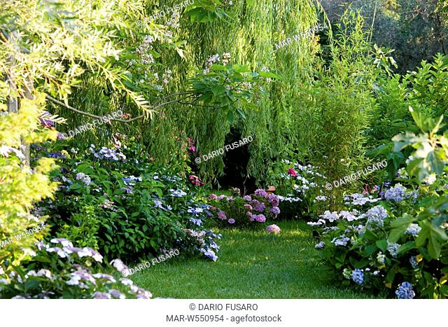 garden with ortensia
