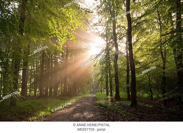 sunbeams shining through forest trees