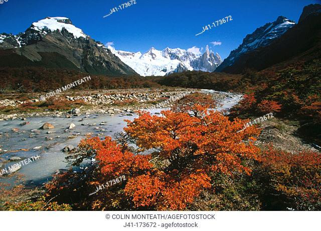 Cerro Torre and Lenga (Nothofagus pumilio). Los Glaciares National Park. Patagonia. Argentina