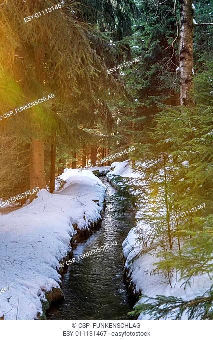 Forest stream in winter