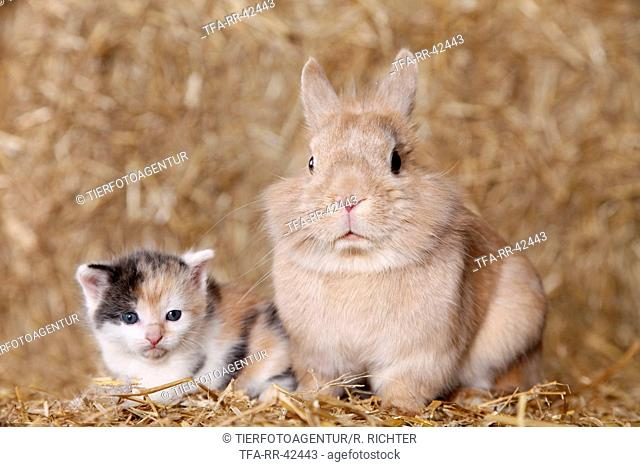lion-headed rabbit and kitten