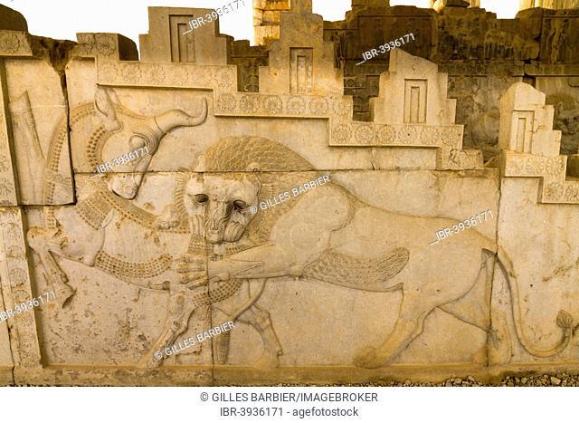 Hunting lion, relief of the Apadana, Persepolis, Fars, Iran