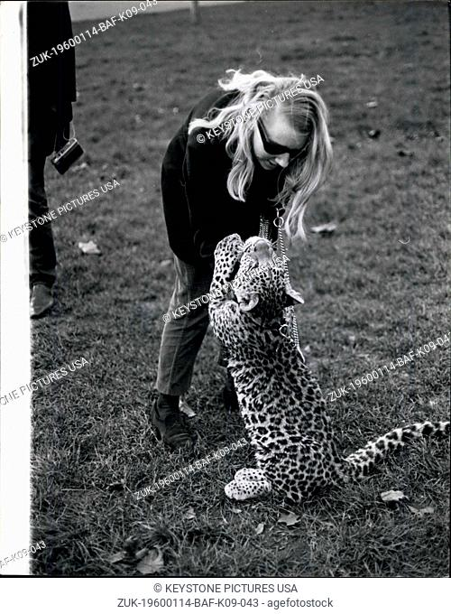 1968 - Angela McWilliams, 23 takes Michael her pet leopard down to Kensington Gardens, for his daily walk. The Problems of Keeping a Pet Cat: Angela McWilliams