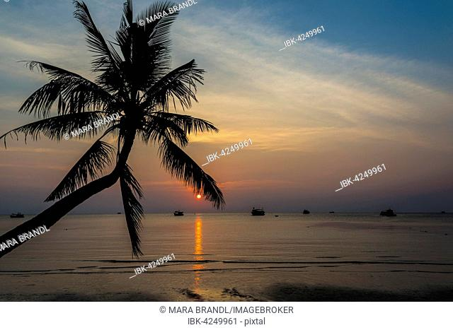 Palm tree by sea at sunset, South China Sea, Gulf of Thailand, Koh Tao, Thailand