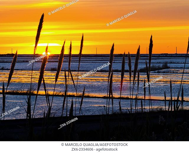 Sunrise over flooded rice fields. Ebro River Delta Natural Park, Tarragona province, Catalonia, Spain