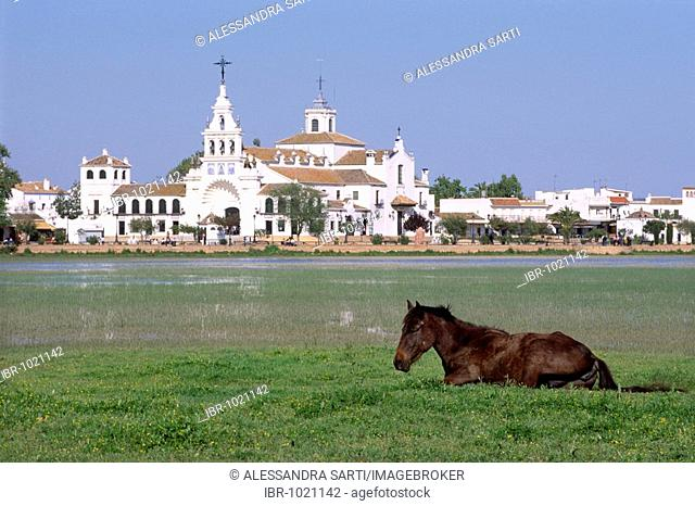 Andalusian horse living in the wild in the Donana National Park, in the back the village El Rocio, Andalusia, Spain, Europe