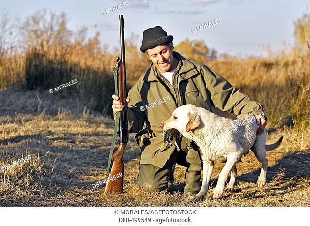 Duck hunting. Labrador brings a common moorhen. Saintes-Maries-de-la-Mer. Bouches du Rhone. France