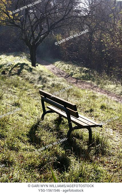one bench in woods with path in countryside