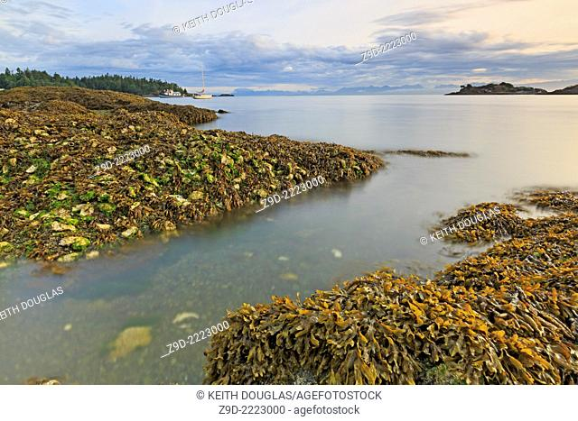 Shoreline with oyster shells near Pipers Lagoon Municipal Park, Nanaimo, Vancouver Island, British Columbia