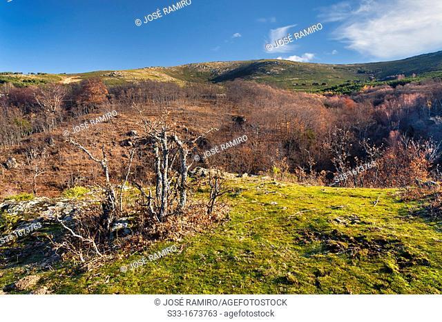 Sierra Cebollera  Sierra Norte  Somosierra  Madrid  Spain