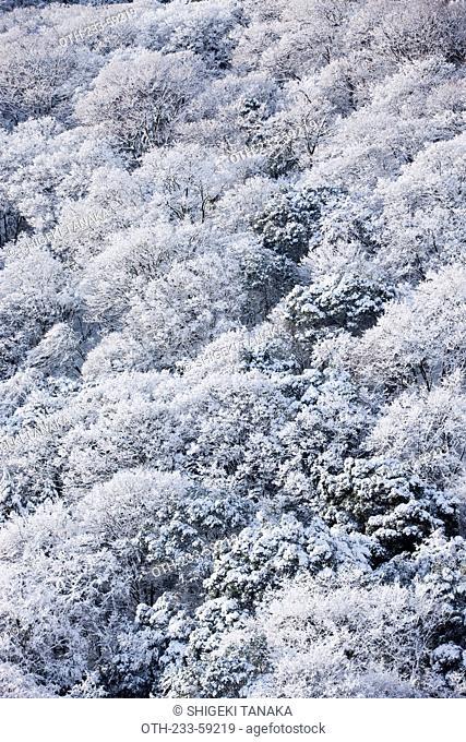 Snow-covered forest at Arashiyama, Kyoto, Japan
