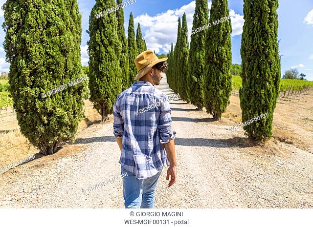 Italy, Tuscany, man walking on a road with cypresses