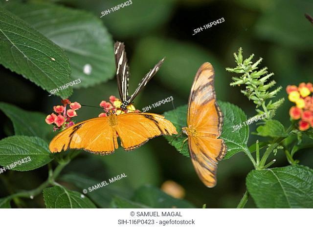 New York City, Bronx Zoo, Butterfly