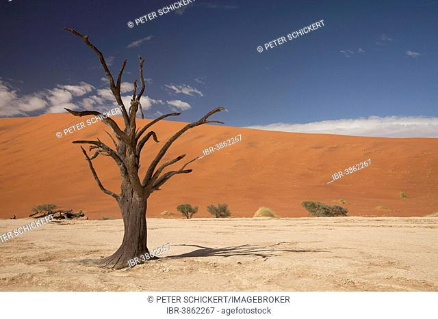 Dead tree in the Dead Vlei desert, Namib-Naukluft National Park?, Skeleton Coast National Park, Hardap Region, Namibia