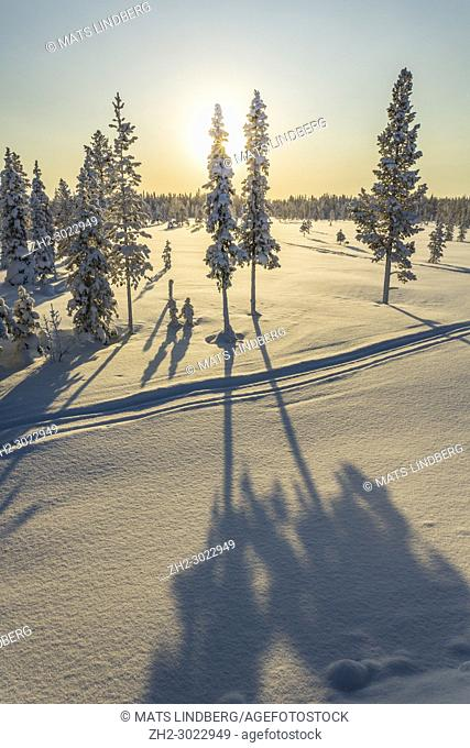 Winter landscape in direct light making the shadows from the trees in the foreground, Gällivare county, Swedish Lapland, Sweden