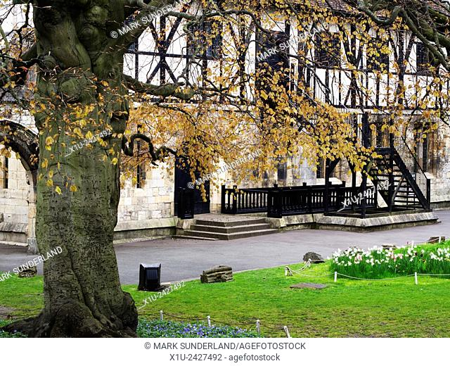 Beech Tree at The Hospitium in Spring Museum Gardens York Yorkshire England