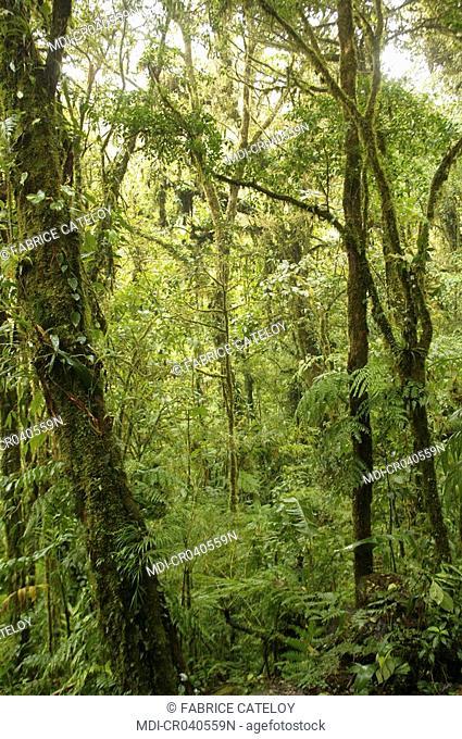 Costa Rica - Monteverde - Reserva Biologica Bosque Nuboso