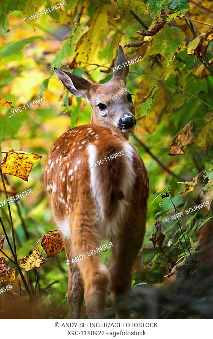 A Wild Deer in the forest
