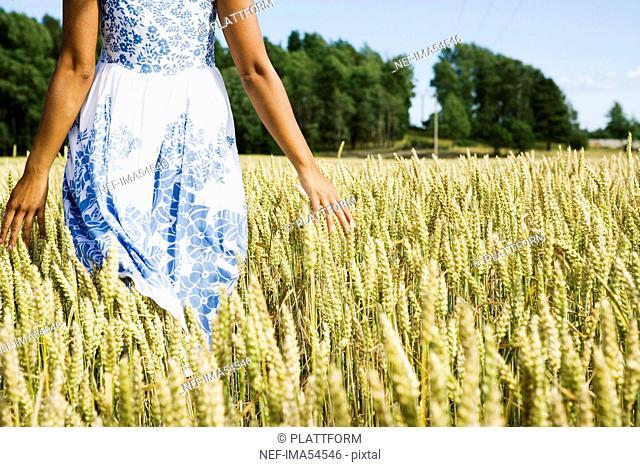 A field of corn, Sweden