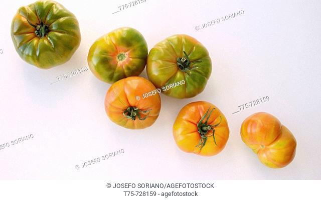 Tomatoes 'Raf'