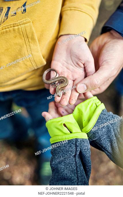 Hands with lizard