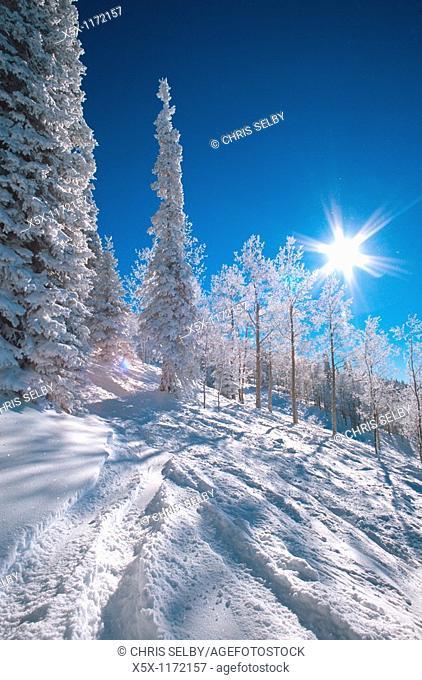 Powder skiing at Steamboat Colorado USA