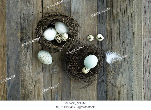 Two Easter nests with various eggs on a wooden table