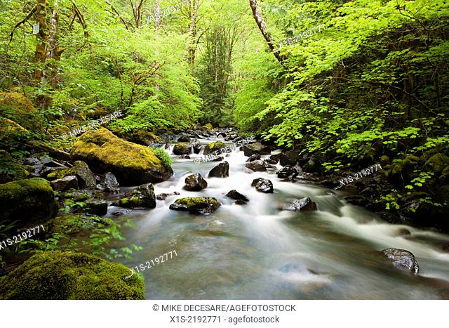 Tree branches and green leaves on either side frame a fast moving river flowing through a forest in the Pacific Northwest