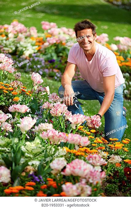 Gardener cutting flowers, Pruning secateurs, Hand tool, Garden,
