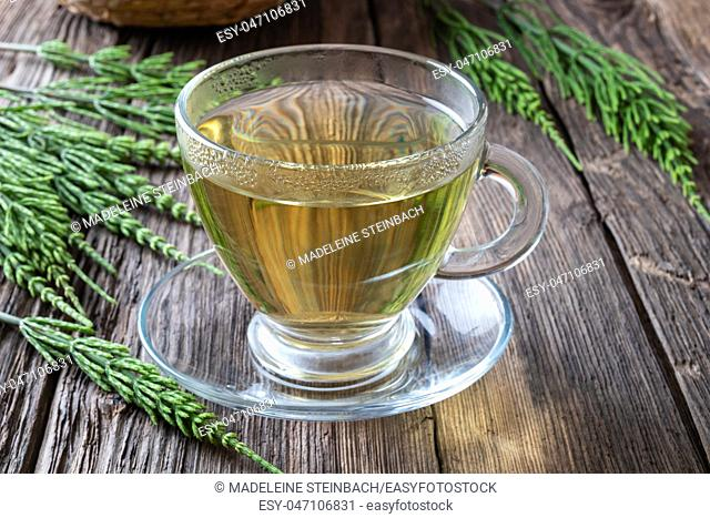 A cup of horsetail tea with fresh plant