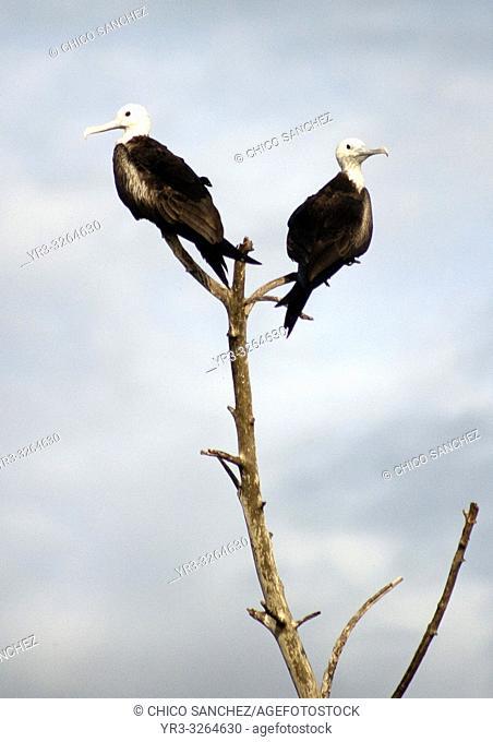 A couple of birds perch on a tree branch in Yucatan, Mexico, June 21, 2009