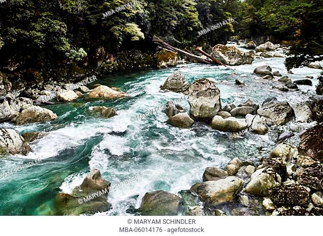 New Zealand, south island, Fiordland, rapid stream, trees, thick wood, turquoise water