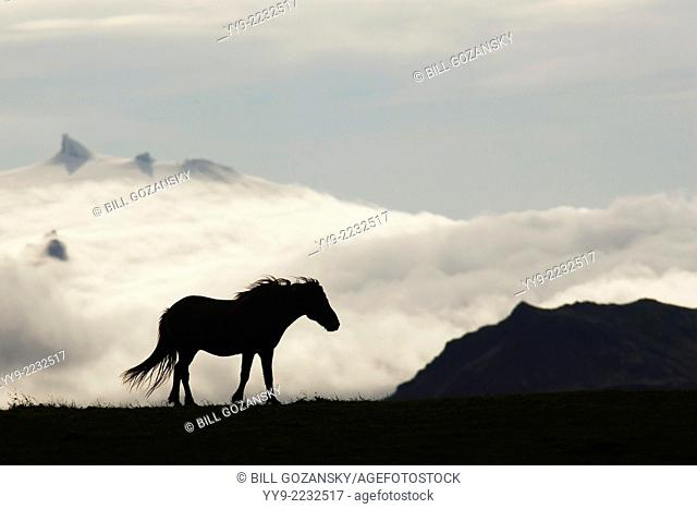 Icelandic Horse Silhouette - Iceland