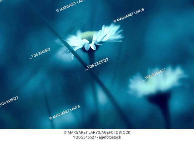 Dreamy daisies background