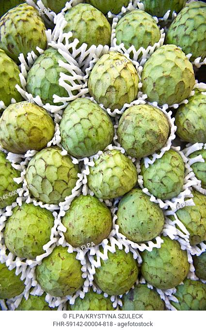 Custard Apple Annona cherimola fruit, for sale at market, Marcat de la Boqueria, Barcelona, Catalonia, Spain
