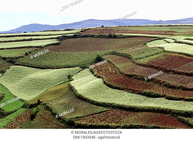 China, Yunnan Province, Kunming Municipality, Dongchuan District, Red lands, Lepuao, terrace cultivation