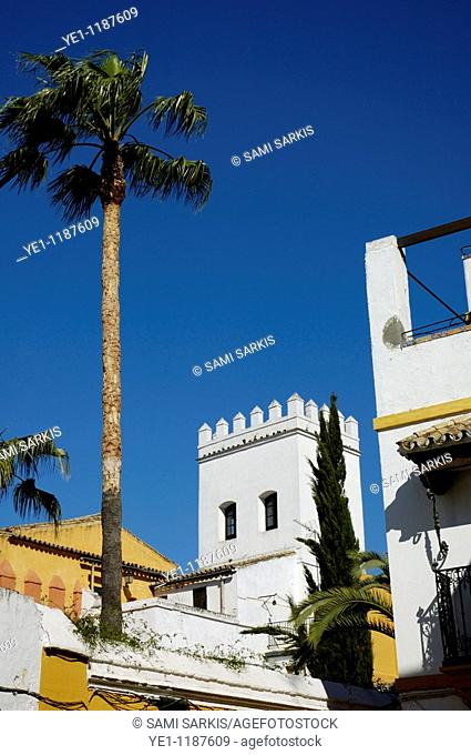 View of tower and palm tree, Barrio Santa Cruz, Seville, Andalusia, Spain