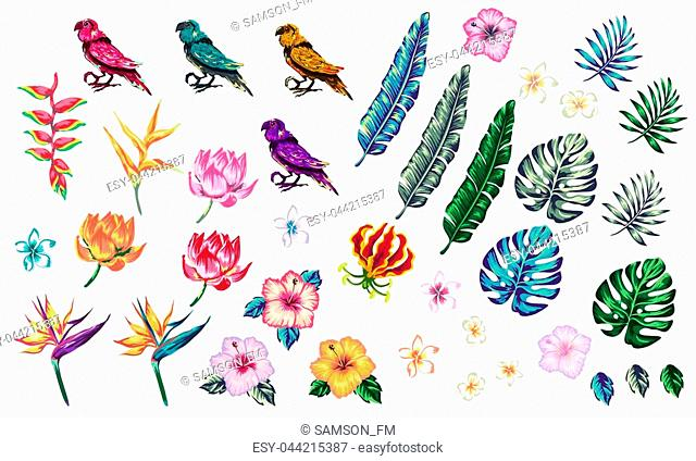 tropical collection with exotic flowers and leaves vector design isolated elements on the white, tropical flowers and parrot